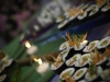 the-yacht-club-caterer-3